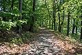 Trail - Rockefeller Park.jpg