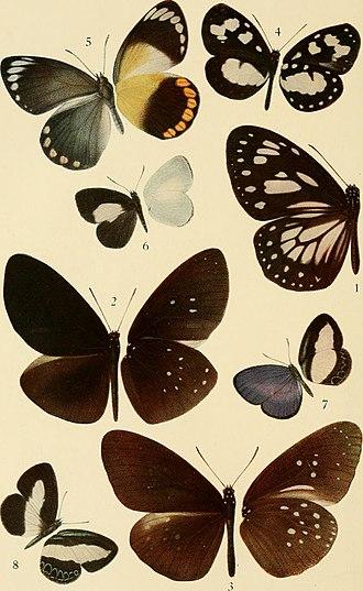 Tellervini - Image: Transactions of the Entomological Society of London (1916) (14580494350)