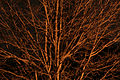 Tree @ Night (468589482).jpg