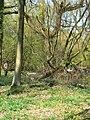 Tree felling, Cobham Frith (4) - geograph.org.uk - 1265339.jpg