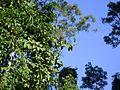 Trepadeiras, árvores e pássaro saindo.jpg