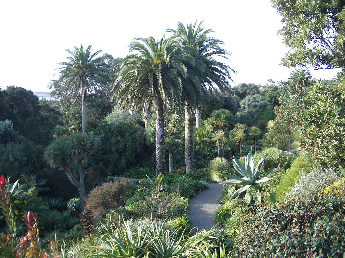 Tresco abbey gardens wikipedia for Garden trees london