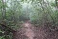 Trilha da Coruja com neblina, Chapada do Araripe.jpg