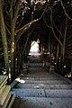 Tunnel Of Trees (47230117262).jpg
