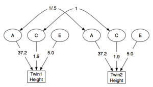 Twin study - A: ACE model showing raw (non-standardised) variance coefficients
