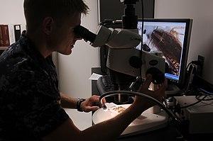 Medical entomology - A U.S. Navy medical entomologist identifying insects
