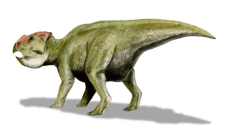 Udanoceratops BW