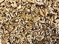 Unshelled walnuts 01.jpg
