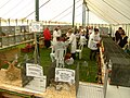 Usk Show Rabbit Competitions - panoramio.jpg