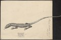 Varanus bivittatus - 1700-1880 - Print - Iconographia Zoologica - Special Collections University of Amsterdam - UBA01 IZ12400019.tif