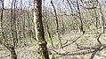 Verőce, 2621 Hungary - panoramio (67).jpg