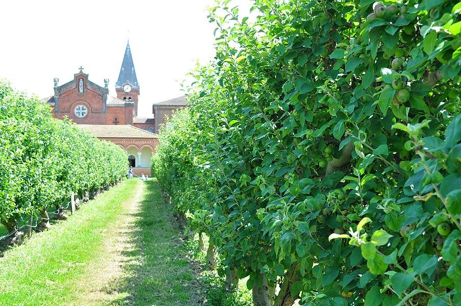 Devant l'abbaye, il y a de jolis pommiers plantés en espalier.