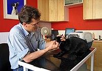 Ветеринар під час хірургічної