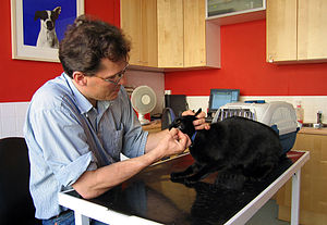 Veterinary medicine in the United Kingdom - A veterinary surgeon removes stitches from a cat's face following minor surgery on an abscess.