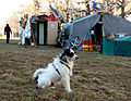 Vienna 2011-03-08 - Augartenspitz Tent and 'First Dog' - 'Master's Voice' is hardly audible.jpg