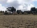 Village au centre de l'Ethiopie (2).jpg