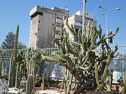 Visit in Cactus garden (Holon) 73