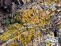 Volterraio - Steine und Flechten 3.jpg
