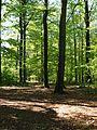 Wald (4a).jpg