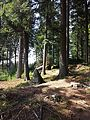 Wald bei Altmelon sl3.jpg
