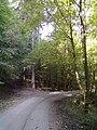 Waldweg - bei Prevorst - geo.hlipp.de - 27681.jpg
