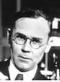 Wallace H. Carothers (head).png