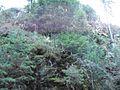 Wandern im November in Todtmoos - panoramio (26).jpg