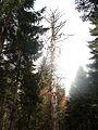 Wanderung im November - panoramio (22).jpg