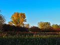 Warner Park - panoramio (58).jpg