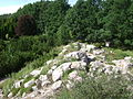Warsaw. Powsin. Botanical Garden 182.JPG
