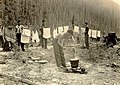 Washing and drying clothes. CCC (Civilian Conservation Corps) Camp no. 2, near Apgar, Montana, at the foot of Lake MacDonald (7fd9ee6e27c743838609bb267e9953f2).jpg