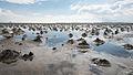 Wattenmeer Nordsee.jpg