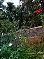 Wayanadan-random-flowers IMG 20180524 152431 HDR (40569779910).jpg