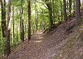 Weg zur Hardenburg 1.jpg