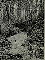 Western field (1905) (14756766286).jpg
