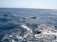 WhaleWatching Finwale 2.JPG