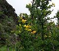 Whf yellow 17.jpg