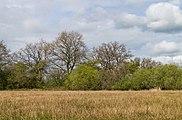 Wijnjeterper Schar, Natura 2000-gebied provincie Friesland 017.jpg