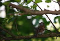 Wildlife birds 17 - West Virginia - ForestWander.jpg