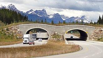Wildlife crossing - Wildlife overpass in Banff National Park, Canada