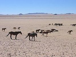 Wildpferde Aus.jpg