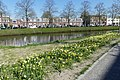 Wilhelminasingel Breda P1360706.jpg