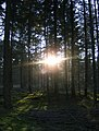 Winterzon in Sellingerbeetse - panoramio.jpg