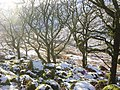 Wistman's Wood in the snow - geograph.org.uk - 561278.jpg