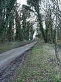 Wooded Road - geograph.org.uk - 362055.jpg