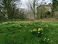 Woodland Glade, Galloway House - geograph.org.uk - 737183.jpg