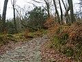 Woodland Path - geograph.org.uk - 1160293.jpg