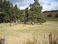 Woodland edge - geograph.org.uk - 1181344.jpg