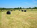 Wrapped Bales near Forge House - geograph.org.uk - 513560.jpg