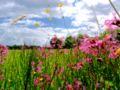 XN Meadow wet 00.jpg
